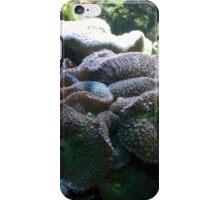 Baltimore Aquarium Series 15 iPhone Case/Skin