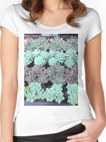 Succulents in rows Women's Fitted Scoop T-Shirt