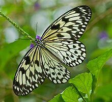 The Butterfly Effect - II by Marilyn Cornwell