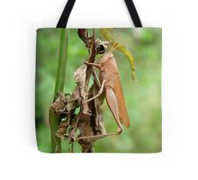Carolina Locust on Dry Spanish Needles Tote Bag