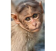Bonnet Macaque Baby Photographic Print