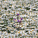 Thousands of Little Sunshines by vbk70
