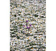 Thousands of Little Sunshines Photographic Print