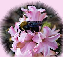 Bee Spring by NatureGreeting Cards ©ccwri