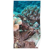 White Spotted Moray Poster