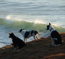Watching the surf by Sue Wetherell
