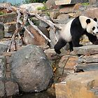 Wang Wang climbing around by Leoni South