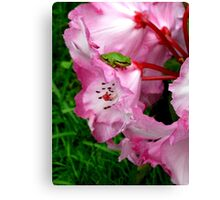 Tiny Red Eyed Tree frog  Canvas Print