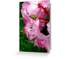 Tiny Red Eyed Tree frog  Greeting Card