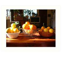 Freshly picked citrus Art Print