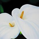 """White Lilies"" by Taniakay"