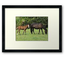 Cumberland Island Wild Mare with Foal Framed Print