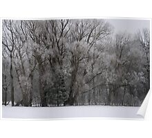 Frosty Morning Trees Poster