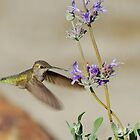 Happy Hummer by photojeanic