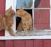 2 Orange Cats at the Barn by livinginoz