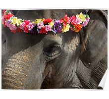Elephant with Headdress Poster