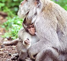 Macaque Mother and Baby by Michael  Moss