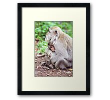 Macaque Mother and Baby Framed Print