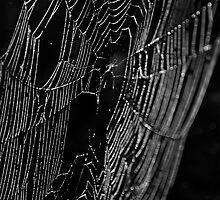 web of bokeh by T.O. Ang