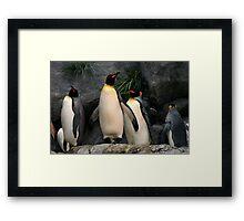 Penguins on Watch Framed Print