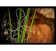 Signed With Love Photographic Print