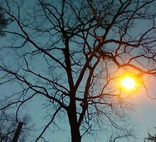 As the sun sets... by MandieM