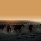 Shadows Rising by Tracey Westbury