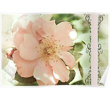 Rose Greetings Poster