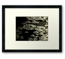 Water Lily Leaves Aged Framed Print