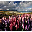 Lupinish Landscape by Robert Mullner