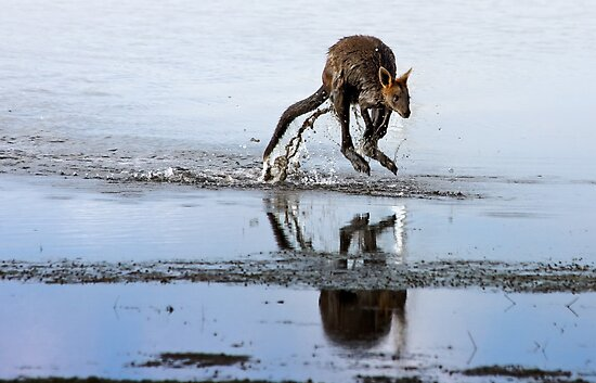 Wandering Wallaby by Cecily McCarthy
