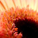 Daisy Daze by myREVolution