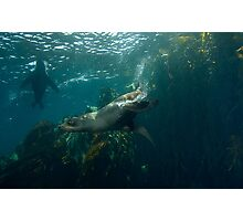 Aquatic K9 Photographic Print