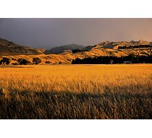 Marlborough Gold Photographic Print