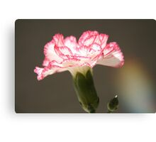 January's flower  Canvas Print