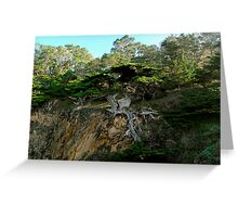 Old Veteran - Point Lobos State Reserve Greeting Card