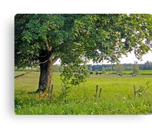 Country scene Canvas Print