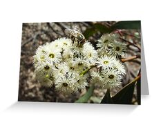 feral bee on bull mallee Greeting Card