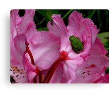 Dinner is Served On A Rhododendron Canvas Print