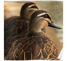 Duck Companion Poster