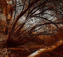 Sepia Woods by Richard Horsfield