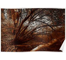 Sepia Woods Poster