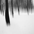ghost trees by Martin Pickard