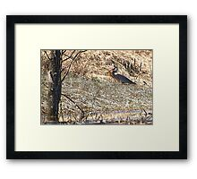 The Grassland Thief Framed Print