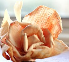 Dried up Rose Flower by gothicfairy18