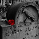 Poe's Red Rose by jwhimages