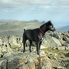 Tarn the Terrier... on Allen Crags by Jamie  Green