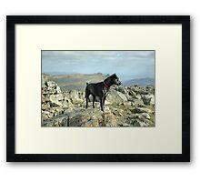 Tarn the Terrier... on Allen Crags Framed Print