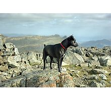 Tarn the Terrier... on Allen Crags Photographic Print