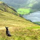 Tarn the Terrier... on High Snockrigg by Jamie  Green